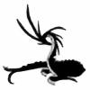 toranekohybrid's avatar