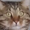 TornadoMash's avatar