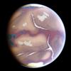 Tree-Sparrow's avatar