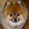 TribblePom55's avatar