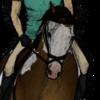 tricolorpinto's avatar