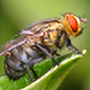 troypiggo's avatar