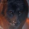 trynxie's avatar
