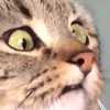 TryToFindSomeOne's avatar