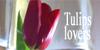 Tulips-lovers's avatar