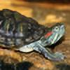 TurtleLover1999's avatar