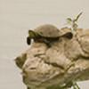 turtlephotography's avatar