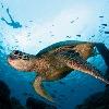 turtles907's avatar