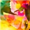 TXSballistics's avatar
