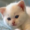 Tysen12's avatar