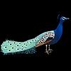 UeKko's avatar