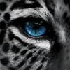 UfoLeopardo's avatar