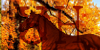 UltimateHanoverians's avatar