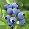 UltraHappyBlueberry's avatar
