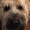 Umayoyo's avatar