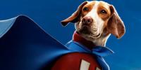 UnderdogFanclub's avatar