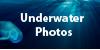 Underwater-photos's avatar