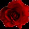 UninterestedRose's avatar