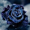 UnknownRoses's avatar