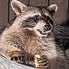 Unnamed0guy's avatar