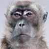 usucapiao's avatar