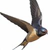 V-Avicre's avatar