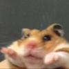 valenperezh's avatar