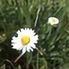 Valerianne2363's avatar