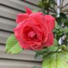 ValerieTompson's avatar