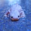 ValleyPhos's avatar