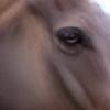 VALORSIE's avatar