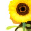 valse-estival's avatar