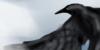 VeganART's avatar