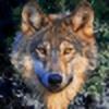 Velcis's avatar