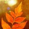 verilabelcin's avatar