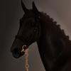 Versallese's avatar