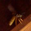 Vesalia's avatar