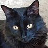 Veteve's avatar