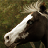 Vhikarunogo's avatar