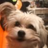 victoriazhura's avatar