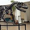 VictoryAllosaurus's avatar