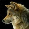 Ville127's avatar