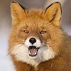 VioletLavender's avatar