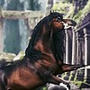 VIP-EquineArt's avatar