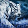 viper2678's avatar
