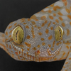 VisualDrawings's avatar