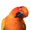 Vivbird's avatar