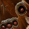 vladapr's avatar