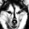 VolkovaOlga's avatar