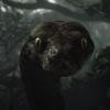 vorelovegrl's avatar